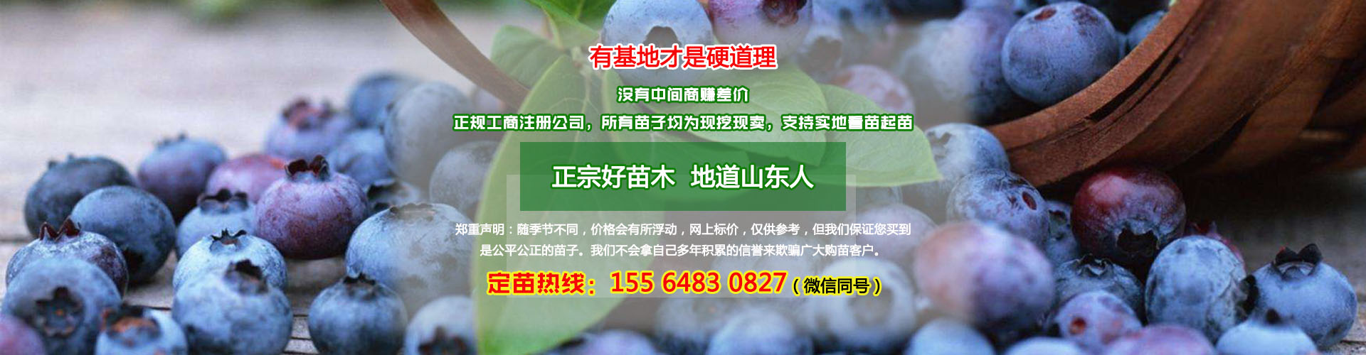 蓝莓苗多少钱一棵